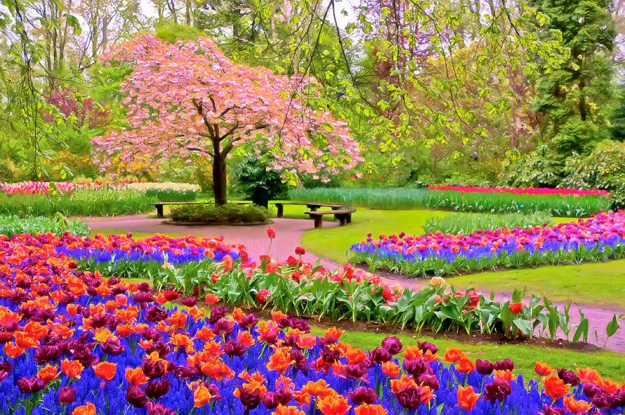 بالصور صور فصل الربيع , اجمل الفصول هو فصل تفتح الزهور 4779 8