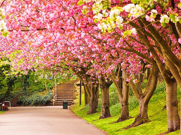 صورة صور فصل الربيع , اجمل الفصول هو فصل تفتح الزهور