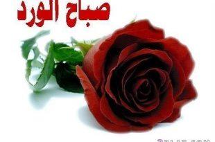 بالصور ورد صباح الخير , اجمل صباح ببهجه اروع الورود 4783 15 310x205