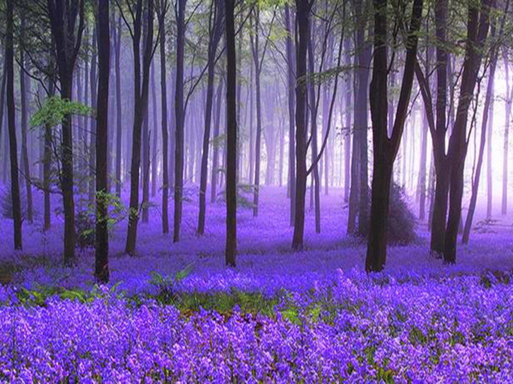 بالصور مناظر طبيعيه روعه , اسعد روحك بمشاهده اجمل المناظر الطبيعيه 4802 13