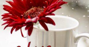 صوره صور فيس بوك صباح الخير ومساء الخير , خلفيات فيس بوك مكتوب عليها عبارات مساء الخير وصباح الخير
