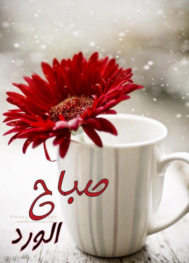 بالصور صور فيس بوك صباح الخير ومساء الخير , خلفيات فيس بوك مكتوب عليها عبارات مساء الخير وصباح الخير 3450
