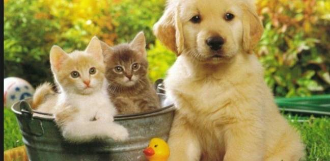 صوره قطط وكلاب , صور قطط وكلاب كيوت