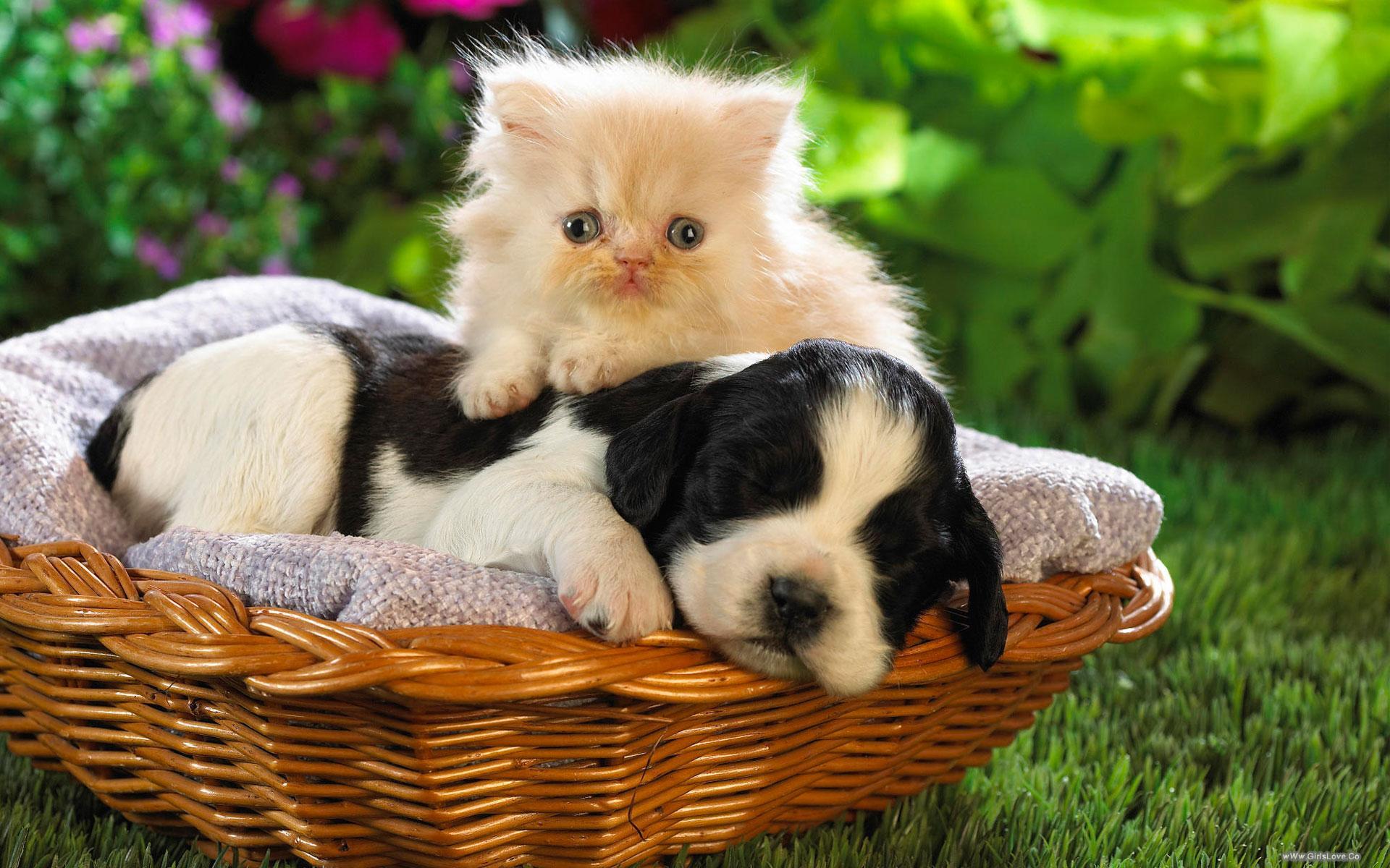 بالصور قطط وكلاب , صور قطط وكلاب كيوت 3561 2