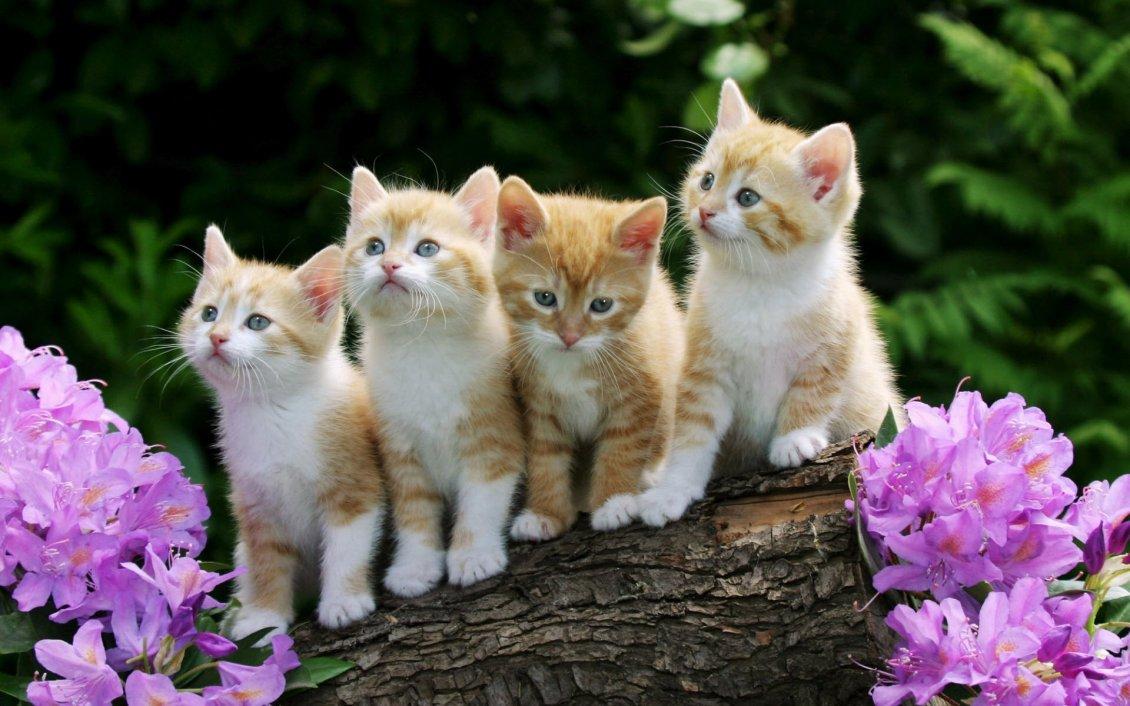 بالصور قطط وكلاب , صور قطط وكلاب كيوت 3561 3