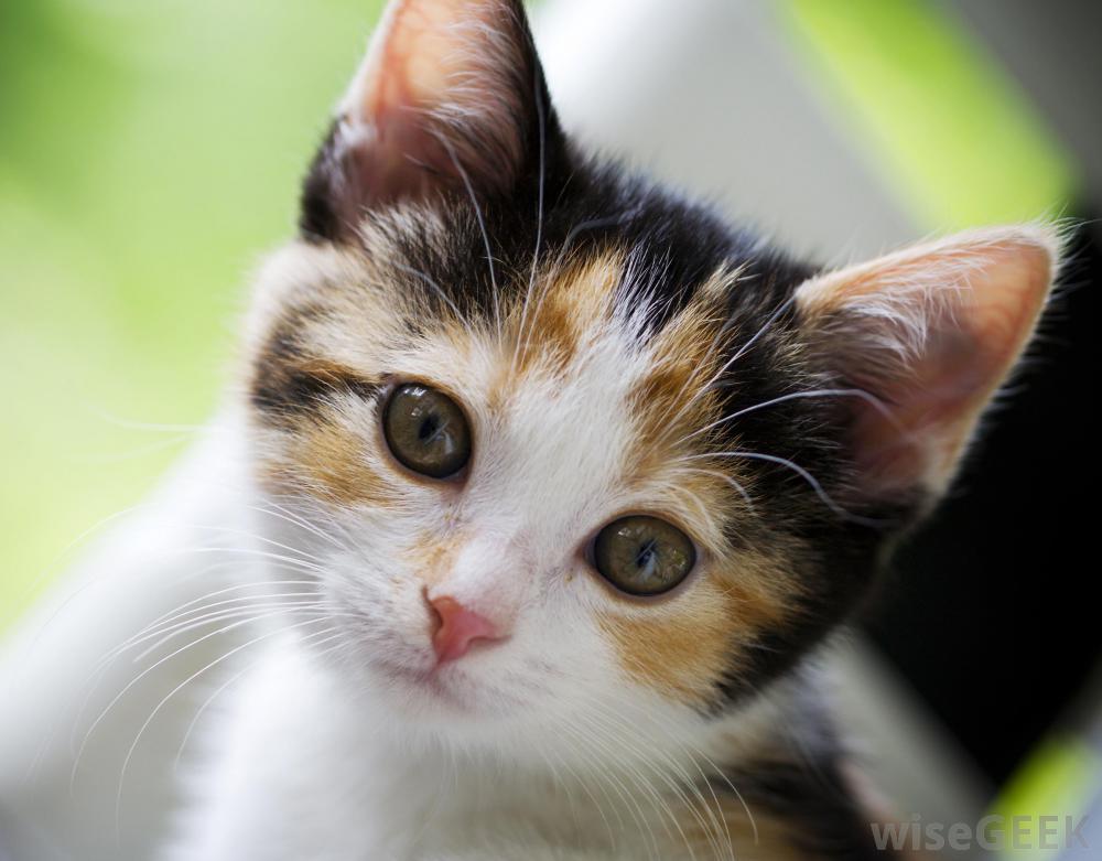 بالصور قطط وكلاب , صور قطط وكلاب كيوت 3561 7