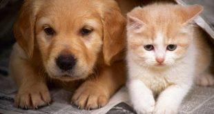 صورة قطط وكلاب , صور قطط وكلاب كيوت