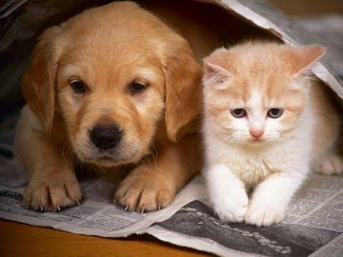 صور قطط وكلاب , صور قطط وكلاب كيوت