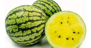 صورة بطيخ اصفر , نوع جديد من الفاكهة المهجنة