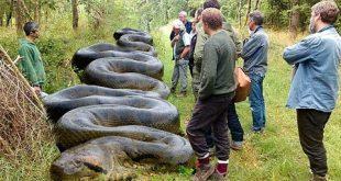 بالصور اكبر ثعبان في العالم , انواع الثعابين الموجوده علي الارض 5033 2 310x165