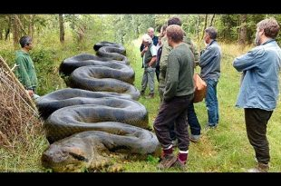 صور اكبر ثعبان في العالم , انواع الثعابين الموجوده علي الارض