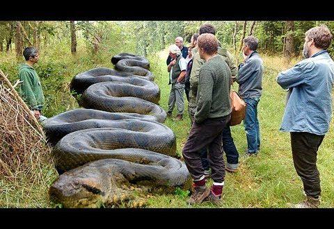 صورة اكبر ثعبان في العالم , انواع الثعابين الموجوده علي الارض