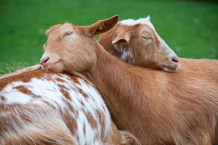 صور احلى الصور حيوانات , صور جميله وروعه للحيوانات