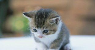 صورة خلفيات قطط , قطط كيوت خالص