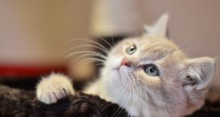 صورة صور قطط صغيرة , قطط شكلها كيوت