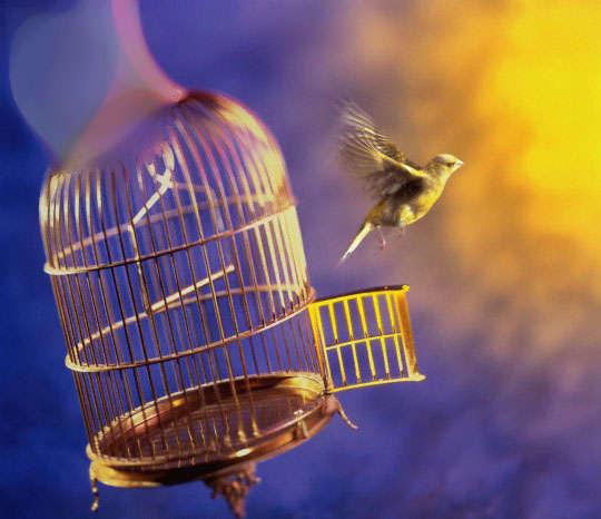 صورة صور عن الحرية , اهمية الحرية والاختيار في حياة الانسان