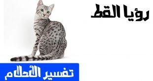 صورة رؤية القطط بالمنام , تفسير حلم القطة