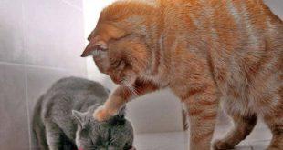 صورة صور حيوانات مضحكة , اجمل لحظات للحيوانات بالصور
